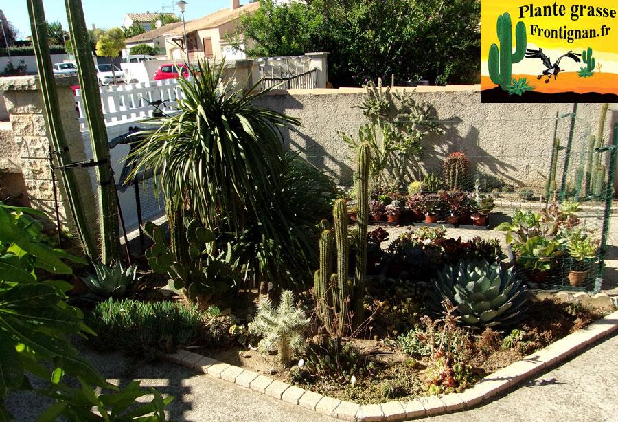 Plantes grasses mediterraneennes for Plante grasse jardin
